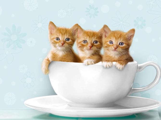 Er waren drie bekers voor drie kittens, of ... drie kittens in een beker?