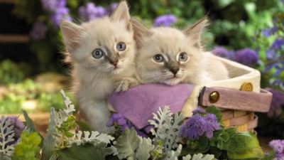 The most tender and funny kittens