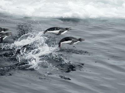 Eles podem pular quase 2 metros da água