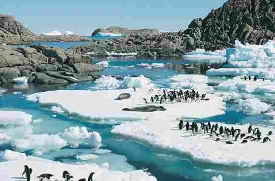 Its habitat includes regions of ..