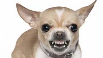 Les races de chiens les plus courageuses