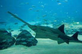 Багамские острова Сьерра-Акула