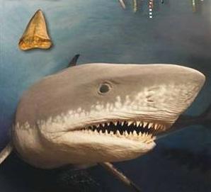 акула-мегалодон