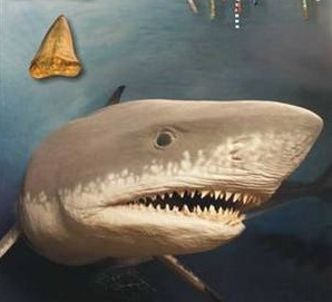 requin mégalodon