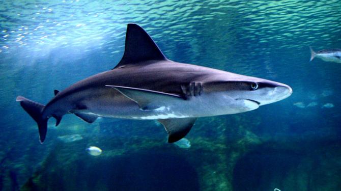 Shark classes