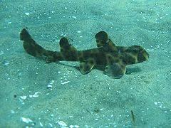 Shark Horn