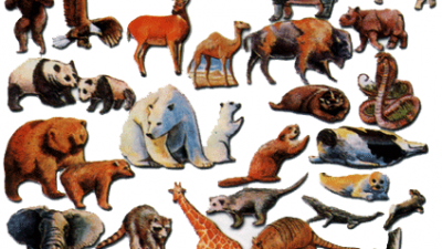 Die ältesten Tiere der Welt