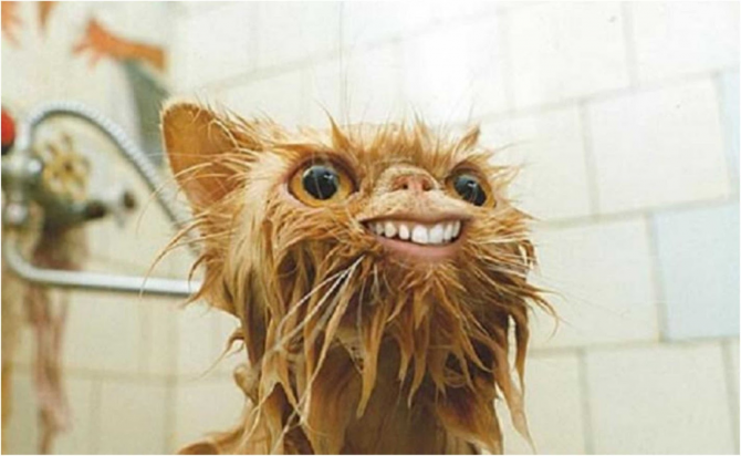 Who doesn't think of a gremlin?