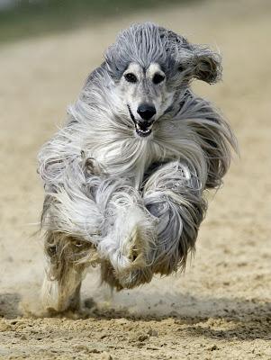 Wil iemand een hondenkus?