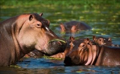 Eles vivem até 50 anos em estado selvagem