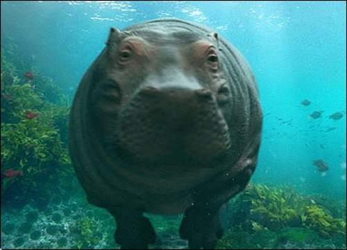 Pode ficar até cinco minutos debaixo d'água, sem se afogar