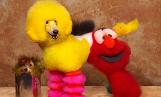 Sesame Street fan