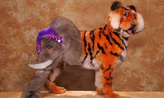 Tigre et éléphant