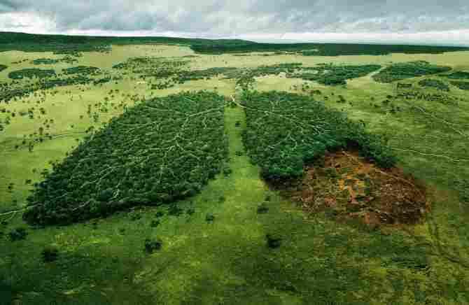 Contra la deforestación y por la vida en el planeta