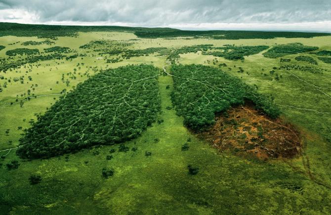Contra o desmatamento e pela vida no planeta