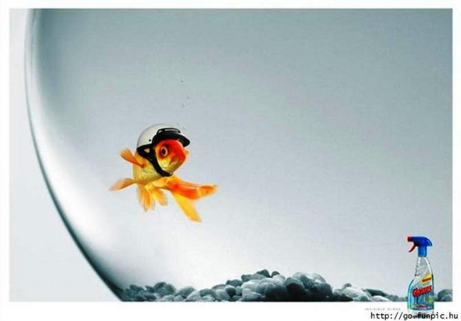 Por causa do limpador de janelas, o peixe se protege para não bater