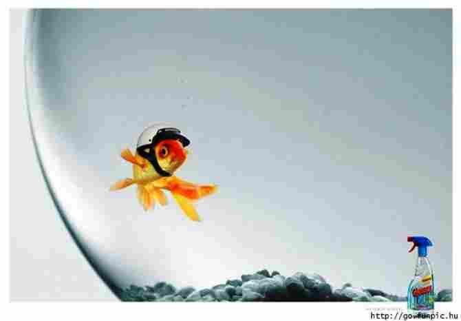 Vì nước lau kính, cá được bảo vệ để không va chạm