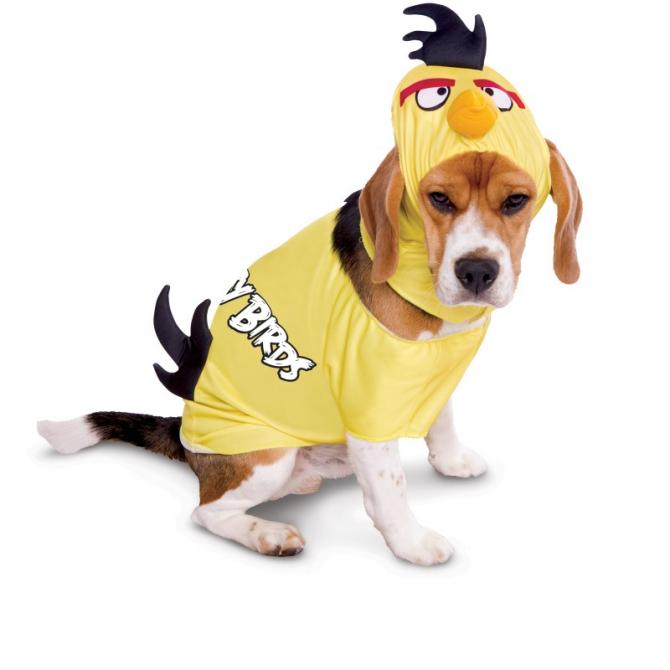 Angry Bird dog