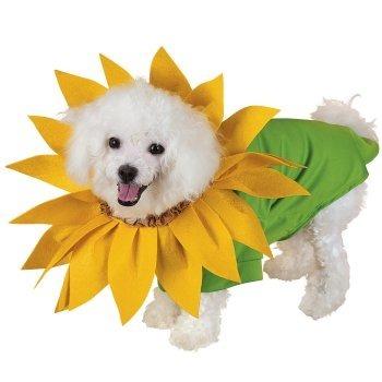 Anjing bunga matahari