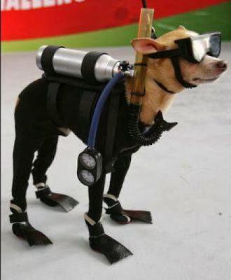 Anjing menyelam