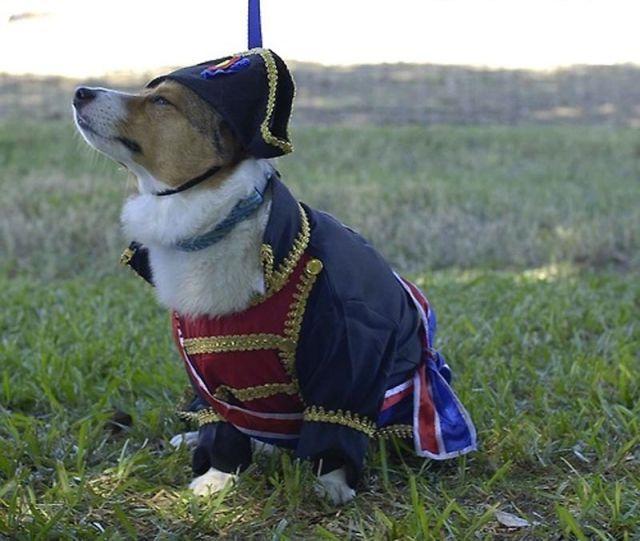 Anjing Napoleon