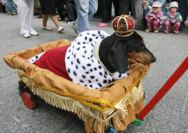 Anjing raja