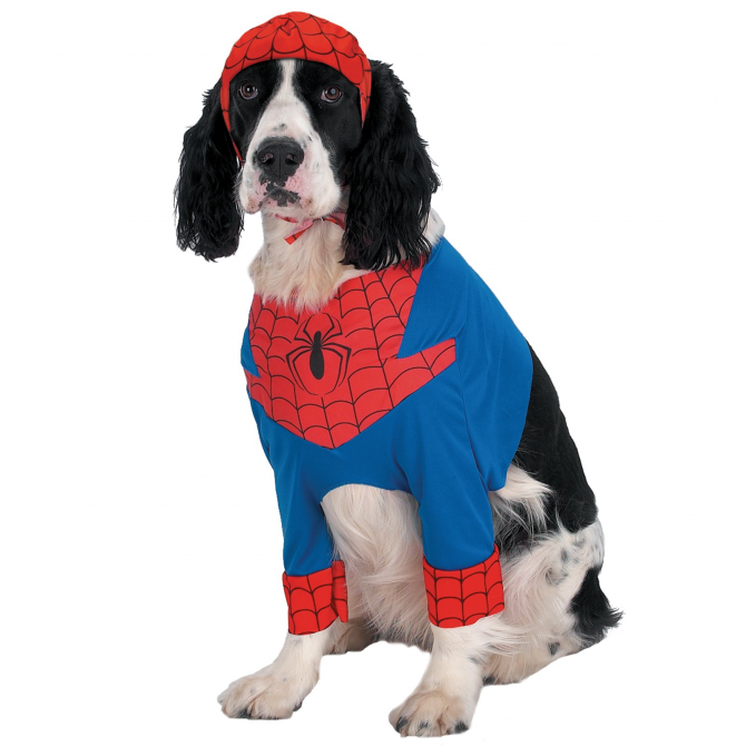 Anjing Spiderdog
