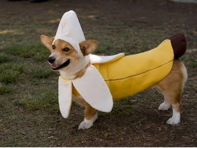 Banane chien