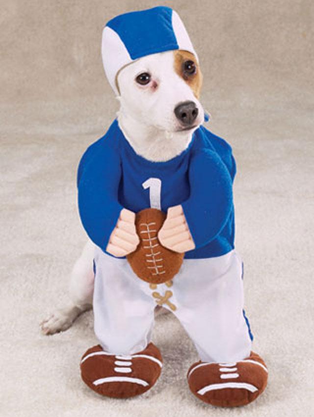 Baseball player dog