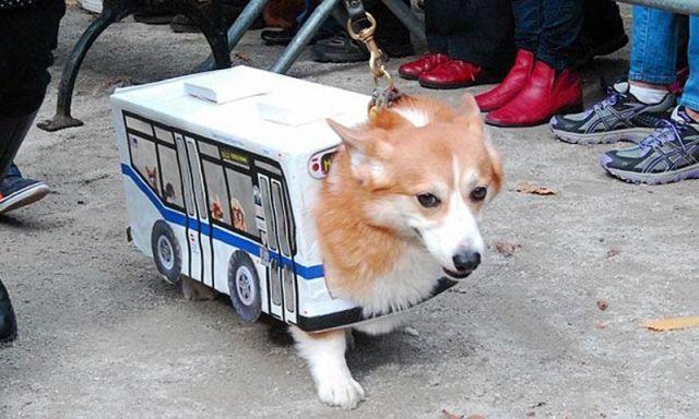Bus de chien