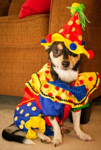 Chien clown