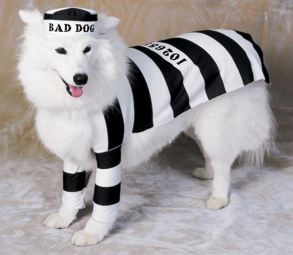 Chien détenu