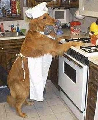 Cuisinier chien