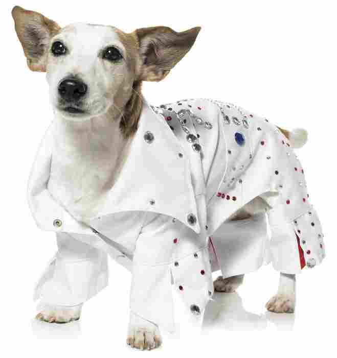 Elvis dog
