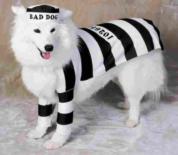 Inmate Dog