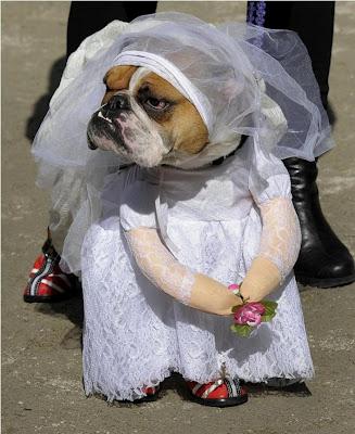 Mariée chien