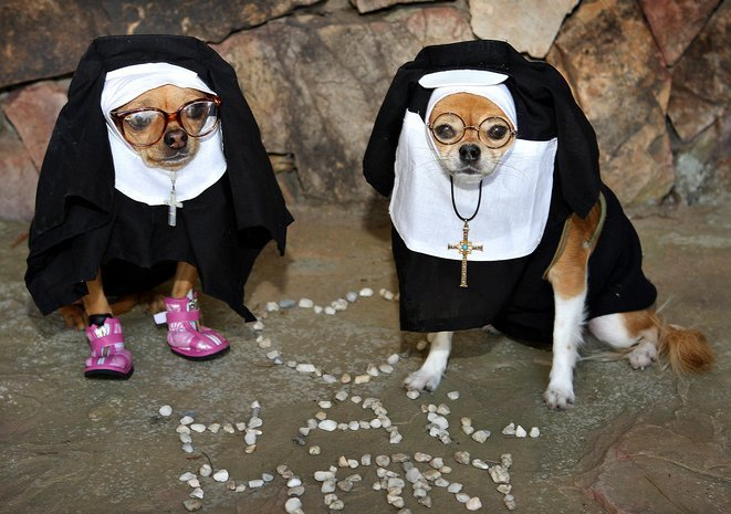 Nun dog
