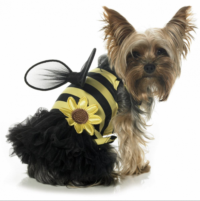 Perro abeja