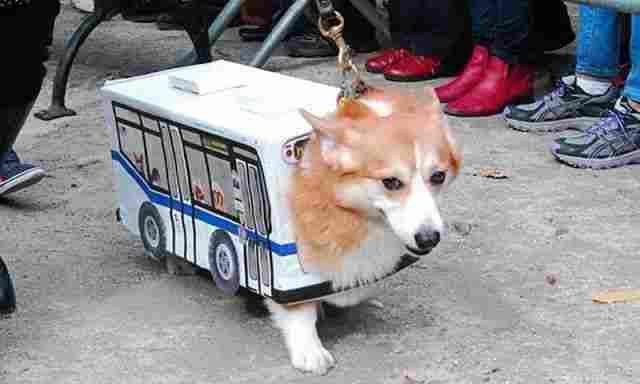 Perro bus