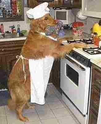 Perro cocinero