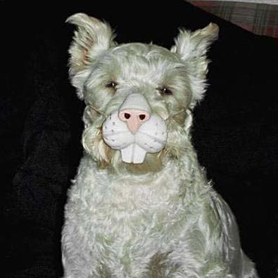 Perro conejo