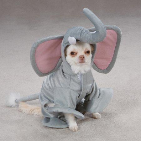 Perro elefante