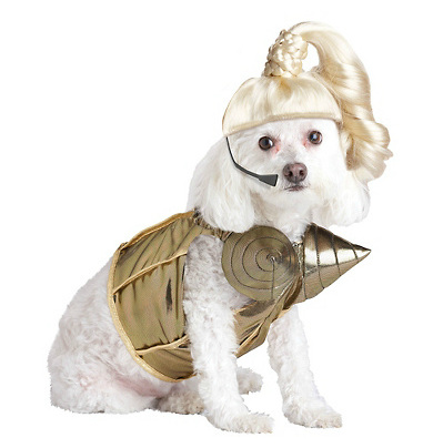 Perro Madonna