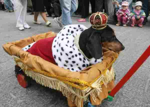 Perro rey