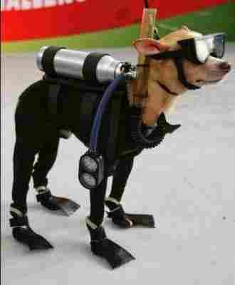Perro submarinista