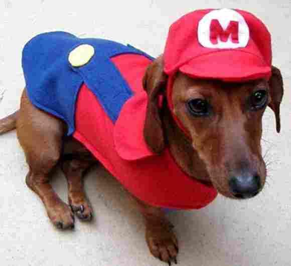 Super Mario Bros dog