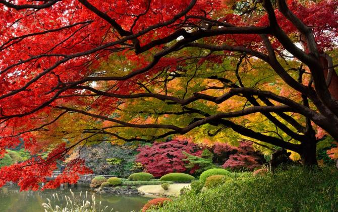 秋 Aki (automne)