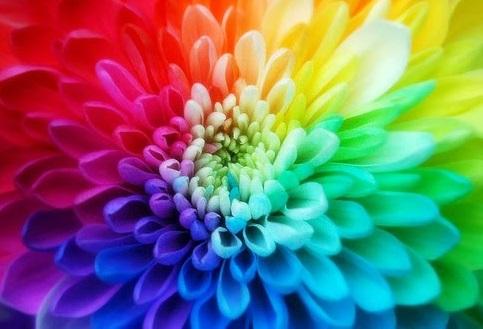 彩 花 Ayaka (fleur colorée)