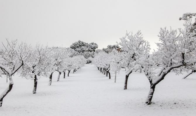冬 木 Fuyuki (arbre d'hiver)