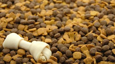 Das beste Futter für Hunde